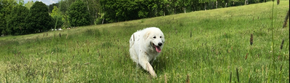 Die Bella auf der grünen Wiese