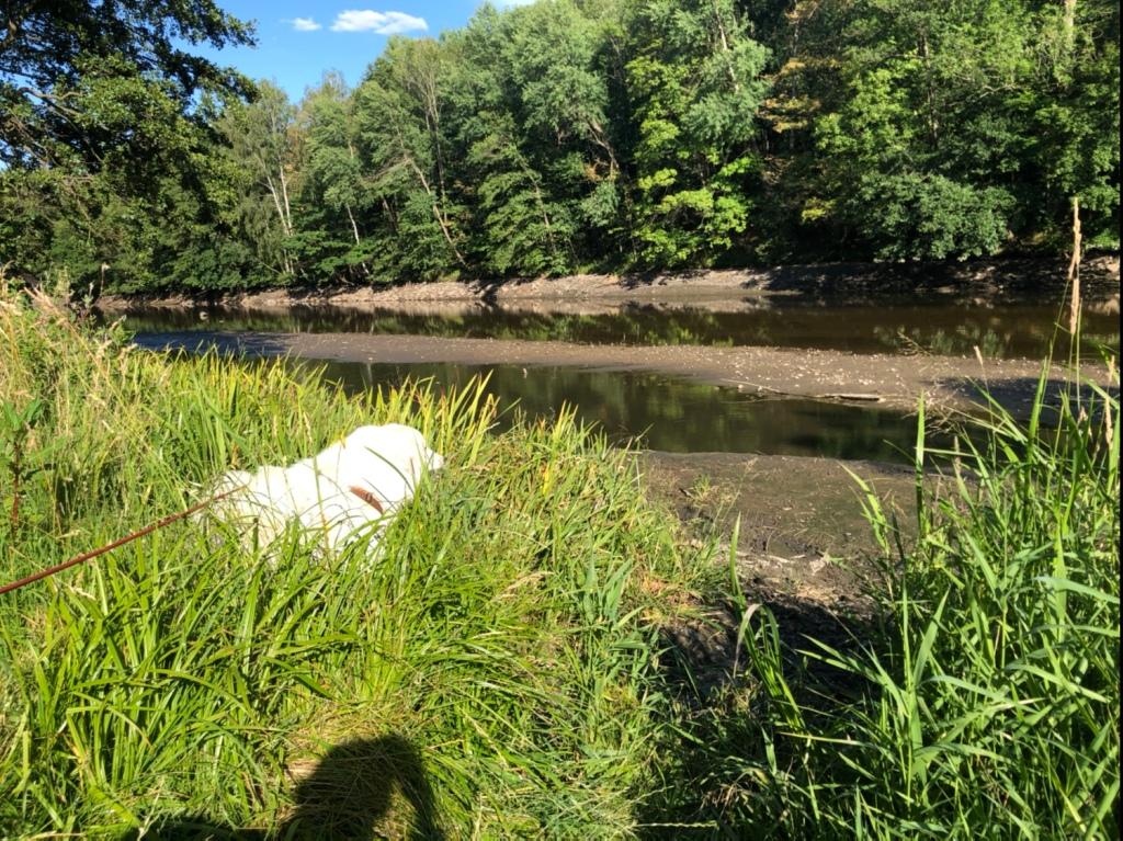 Hier steht die Bella sonst bis zum Pyribäuchlein im Wasser