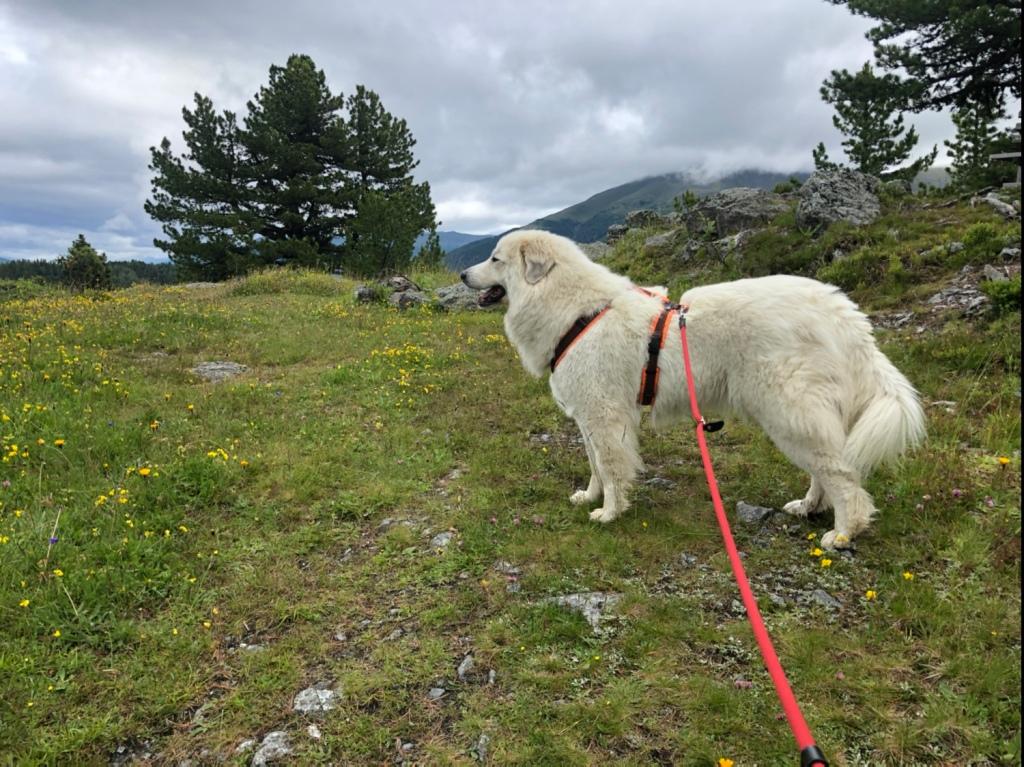 Erster Spaziergang auf die schöne Blumenwiese. Die Bella kennt sich hier aus!