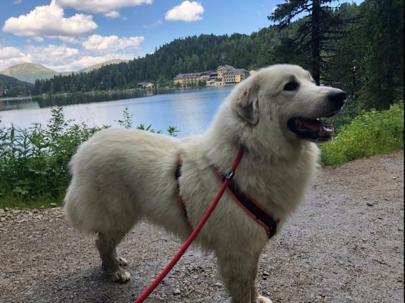 Die Bella am Turracher See