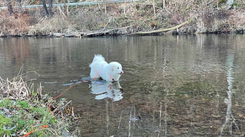 Die Bella badet im großen Fluß mit dem komischen Namen
